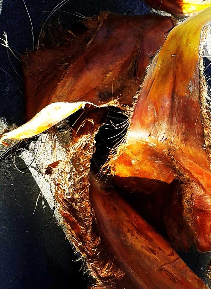 palm-leaf-tustin-6-700