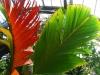 hojas-1-700