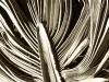 palm-leaf-tustin-1-700
